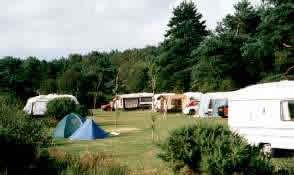 Birchwood Tourist Park - Holiday Park in Wareham, Dorset, England